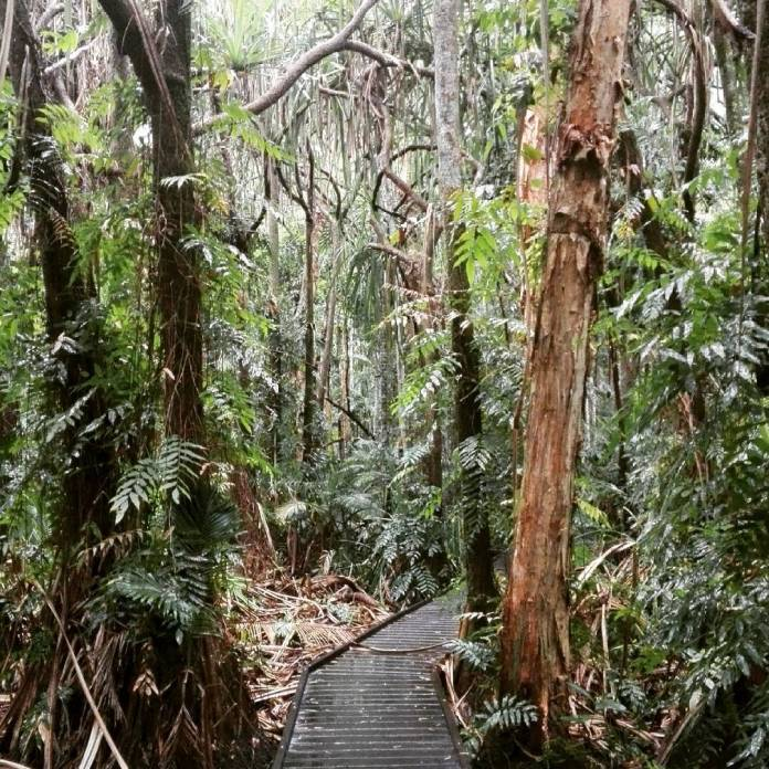 what to do in cairns