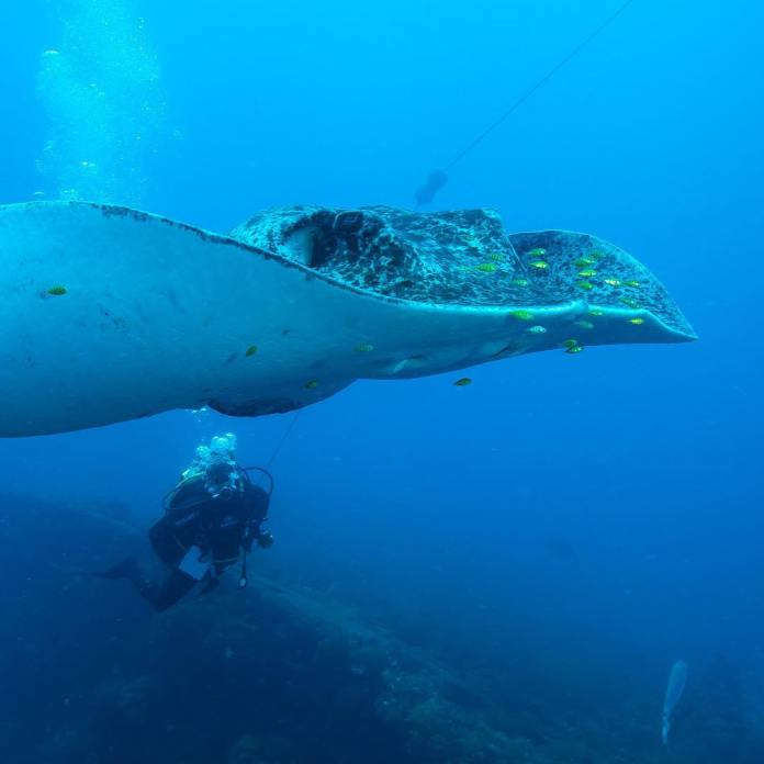 cairns snorkeling