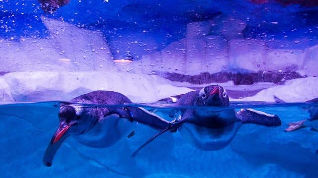 Chim cánh cụt ở Sea Life Bangkok Ocean World