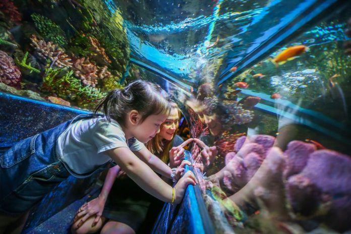 Sea Life Trust ở Sea Life Bangkok Ocean World