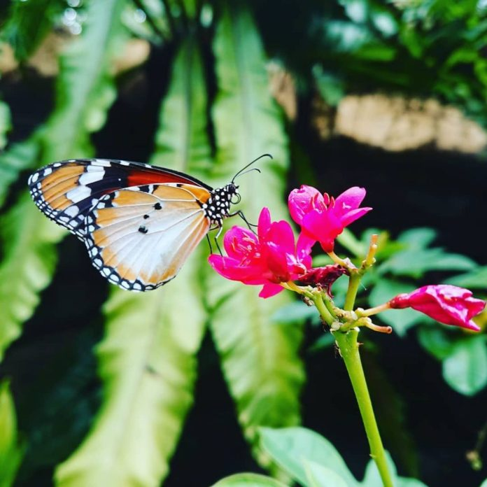 Butterfly Park & Insect Kingdom, Singapore