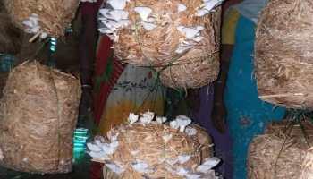 मशरूम उत्पादन से स्वावलंबन की ओर महिलाएं