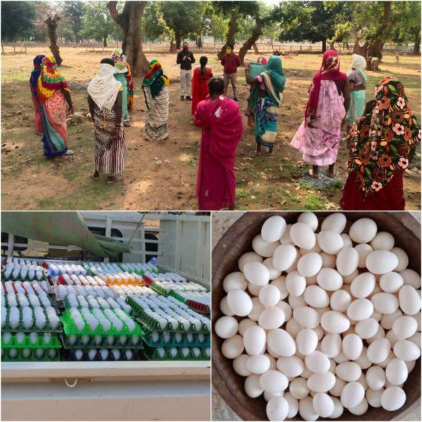 सुपोषण अभियान के लिए महिला समूह कर रहीं अण्डों का उत्पादन