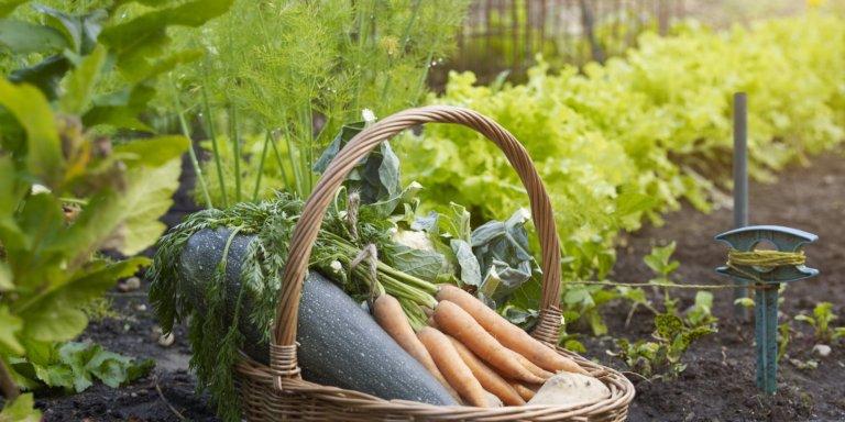 बस थोड़ी सी मेहनत कर घर पर ही बनाएं सब्जियों का बगीचा