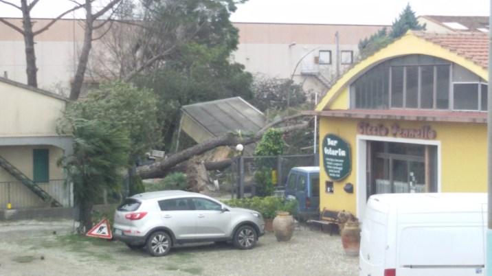 alberio caduto