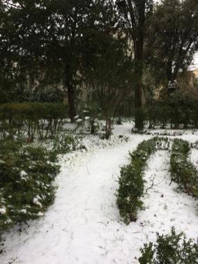 viola neve 3