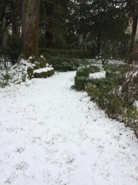 viola neve 5