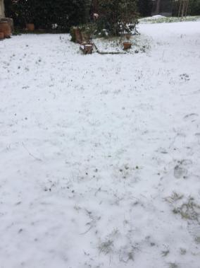 viola neve2