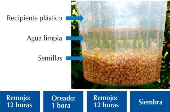 cómo producir forraje hidropónico