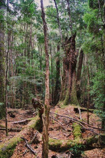 In the Tarkine rainforest (Photo by Mica Ivealis)