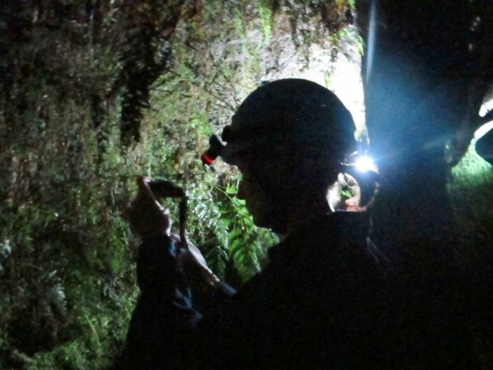 Rachell Patterson studies forest glowworms near Dover