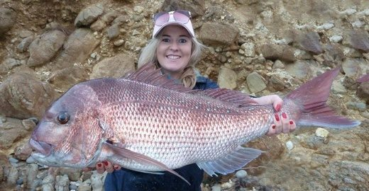 Redmap Photo Sighting 865  Snapper by Johnah Yick