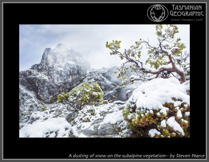 A dusting of snow on the subalpine vegetation-- by Steven Pearce