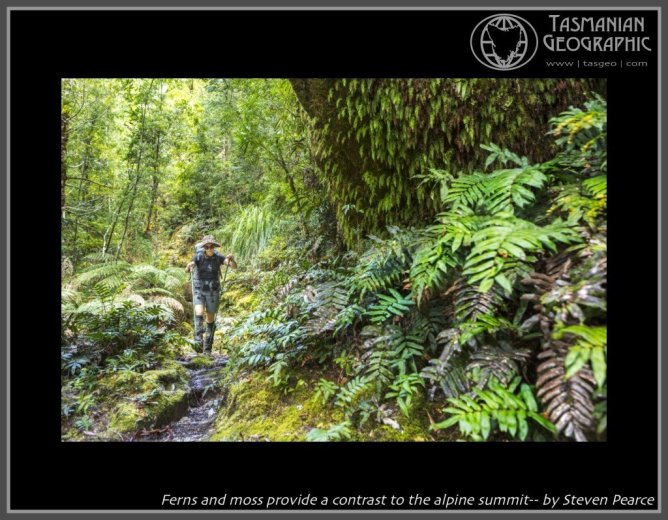 Ferns and moss provide a contrast to the alpine summit-- by Steven Pearce