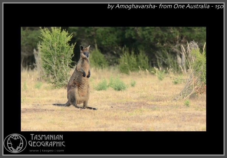 by Amoghavarsha- from One Australia - 150