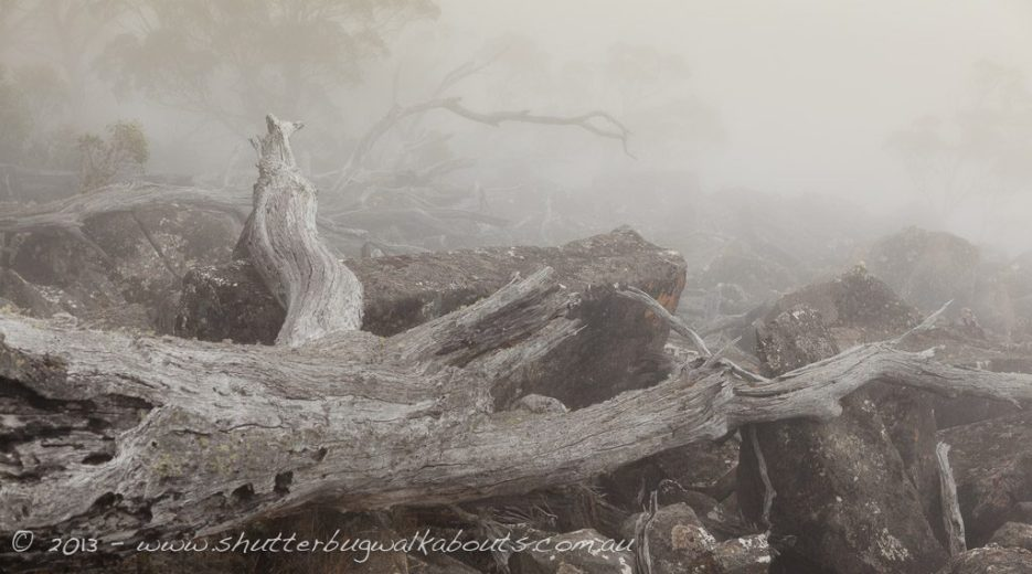 Fog, fallen tree and dolerite rocks-Wellington Park-Mt Wellington- by Shutterbug Walkabouts