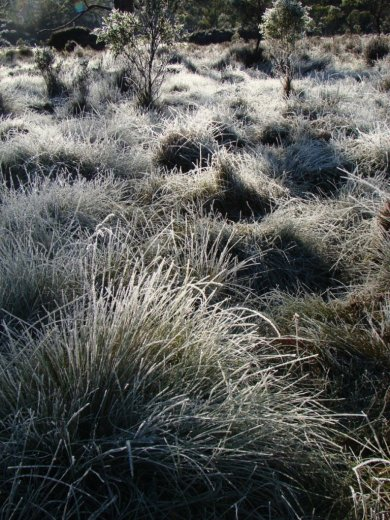 Frosty morning near Narcissus Hut - by Warwick Sprawson