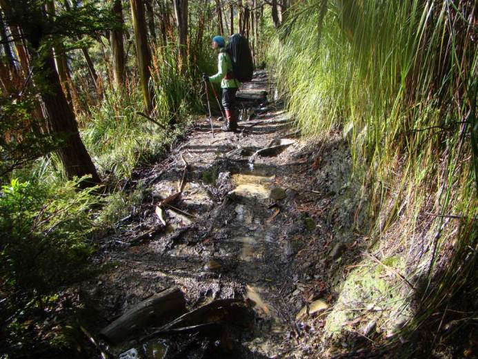 Muddy track near Pelion Creek2 - by Warwick Sprawson