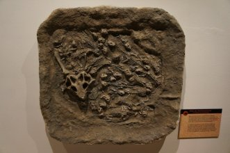 Lost Worlds Restored - Fossil Casting - photo via Peter Norton - 26_2400px