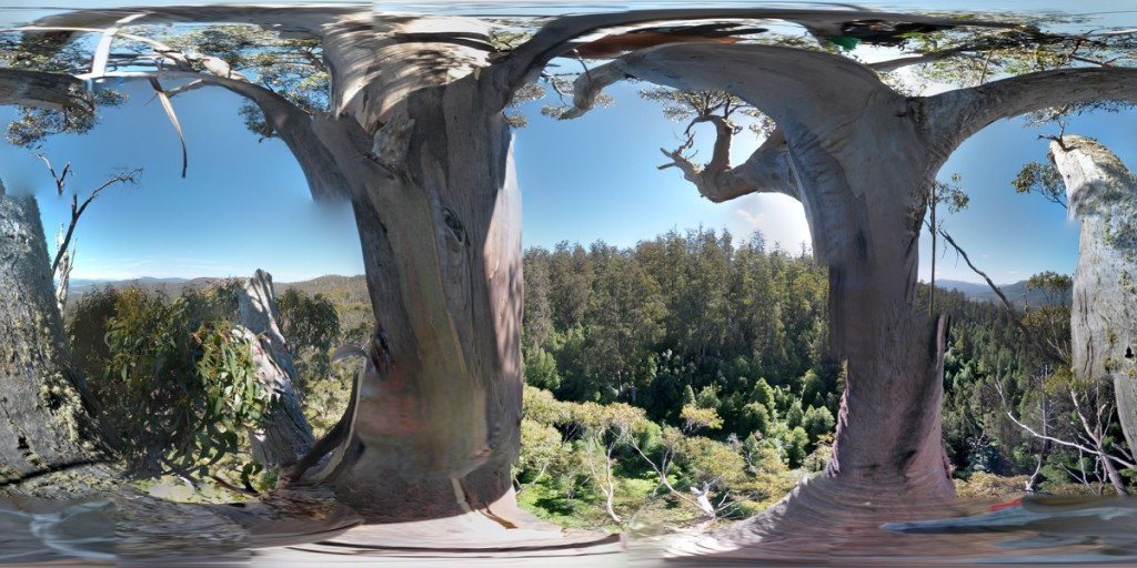 ClimbingTheTallestFloweringTree_byYD BarNess_TasmanianGeographic___Photosphere_D Upper Crown_1200px