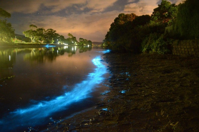Bioluminescence Lauderdale Canal 3- by Lisa-ann Gershwin