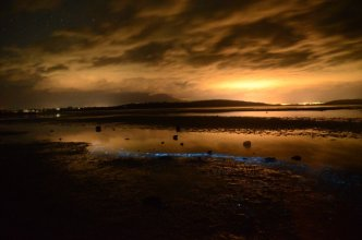 Bioluminescence South Arm incoming - by Lisa-ann Gershwin