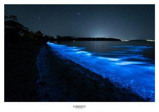 Sea Sparkle -1- by Fiona Walsh