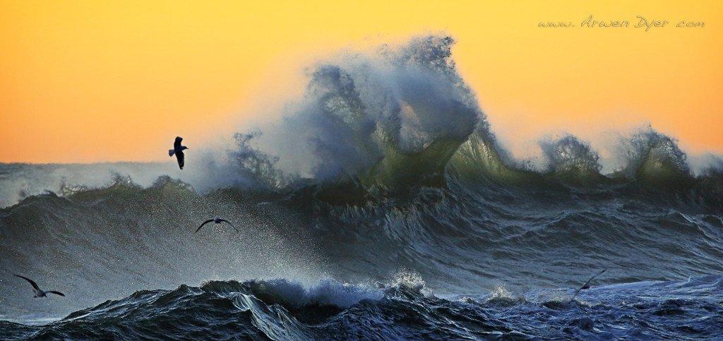 Clapotis Wave, Kohaihai
