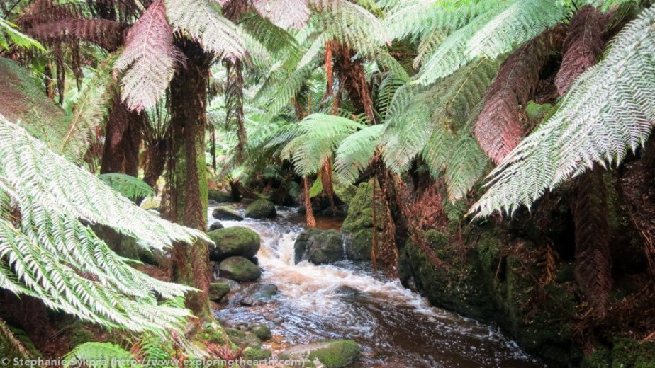 How to Find Sapphires - Rainforest rivers - by Stephanie Sykora