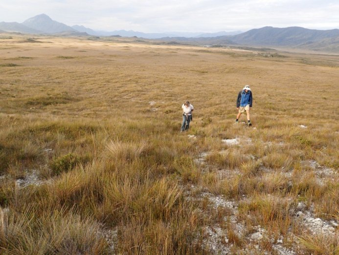 Exploring the buttongrass moorlands - by Nicole Gill