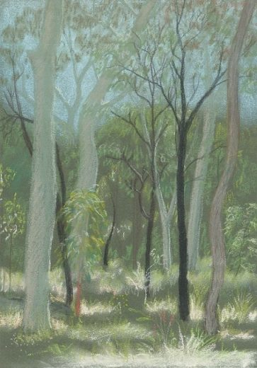 A forest drawn from the usual human perspective showing decapitated trees (mostly stems and not much canopy) - Pastel sketch by Paula Peeters, Blackdown Tablelands, Queensland