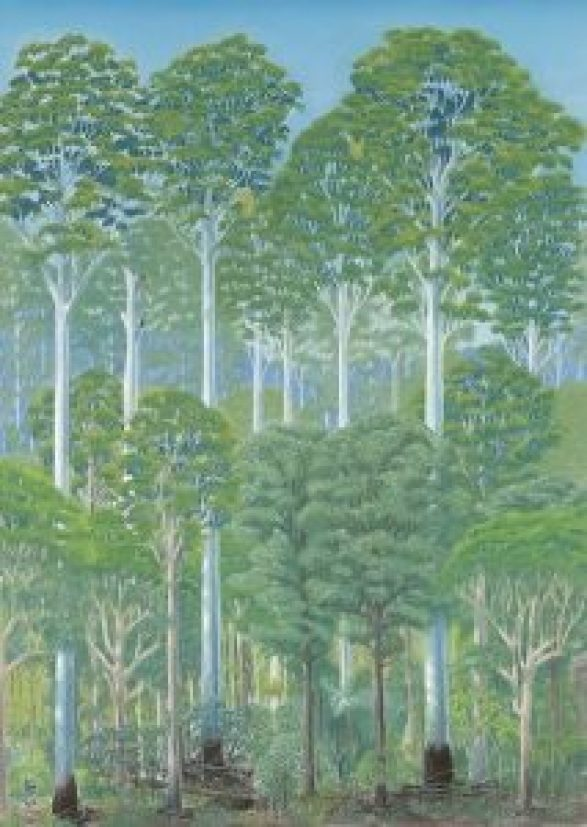 Flooded gum forest - a type of wet sclerophyll forest - pastel on paper, by Paula Peeters (52 cm x 72 cm)