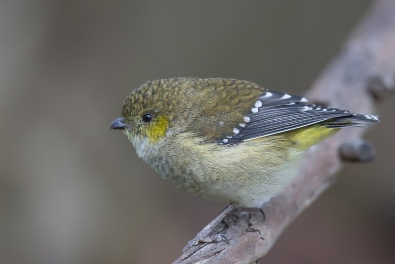 Inala - Haven for Endangered Birds - 3- by Andrew Browne_1200px