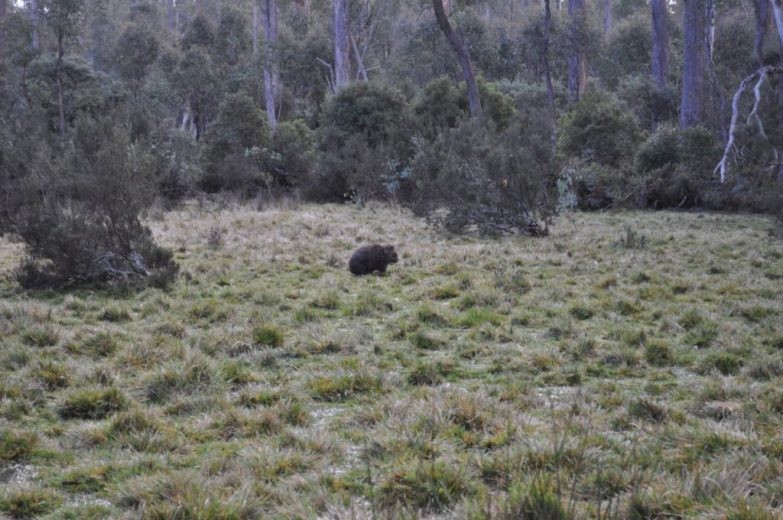 Wombat Warriors - Courtesy of Conservation Volunteers_0114_2400px