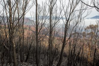 Fire aftermath in the valley- by Nick Fitzgerald