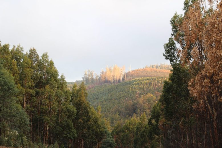 Scouting the Burnt Forest - by YD BarNess-GiantTreeExpeditions- 1