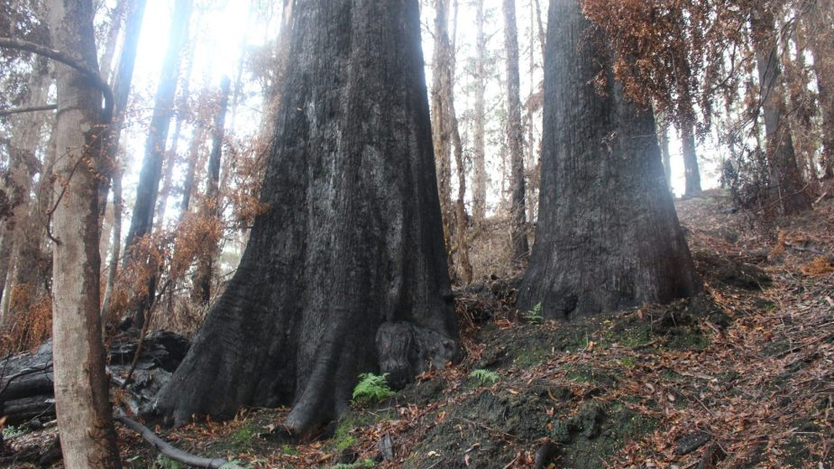 Scouting the Burnt Forest - by YD BarNess-GiantTreeExpeditions- 2