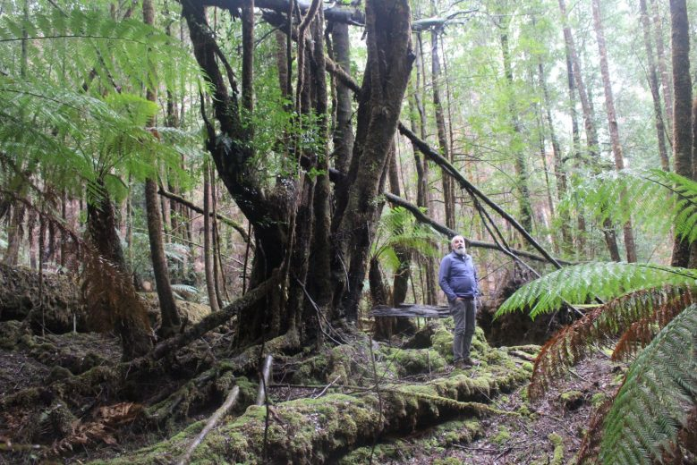 Scouting the Burnt Forest - by YD BarNess-GiantTreeExpeditions- 3