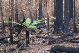 Scouting the Burnt Forest - by YD BarNess-GiantTreeExpeditions- 5