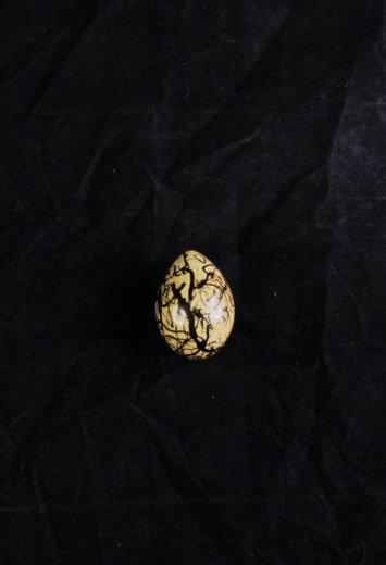 Jacana egg- via Kiara LHerpiniere