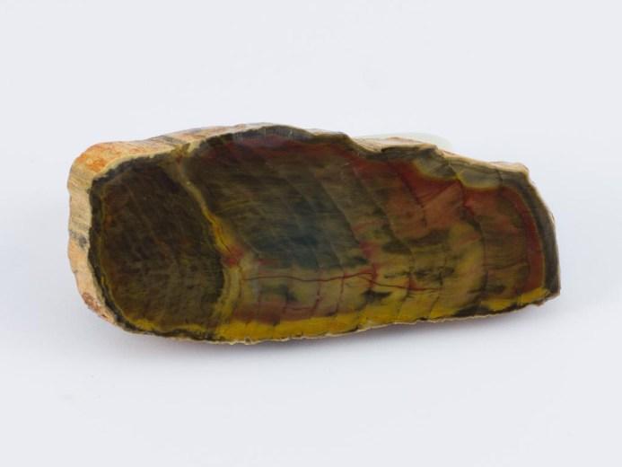 Petrified Wood - Specimens from Tasmania- by Apple Isle Prospector- 2