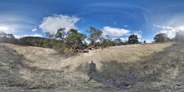 Coal River Tier Study Site 10 Fallen Trees