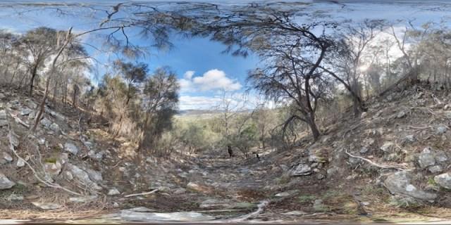 Coal River Tier Study Site 07 Casuarina Grove