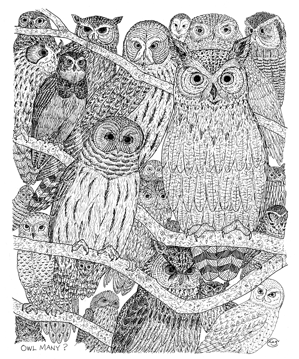 Drawing of group of owls