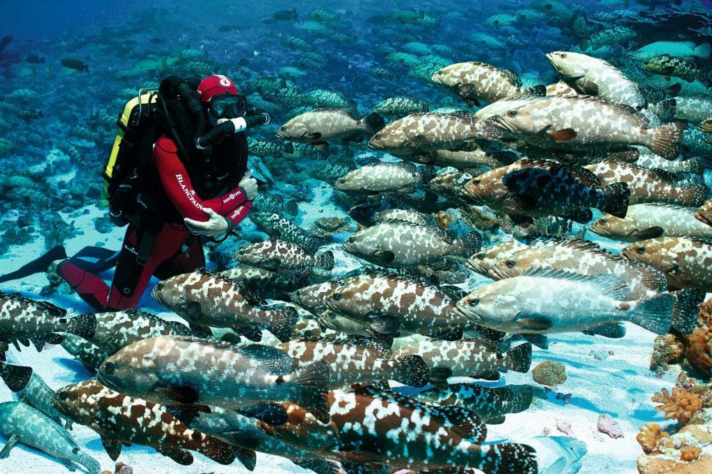 Gombessa II French Polynesia 2014 ©Laurent Ballesta