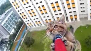 kitten-saved-from-ledge