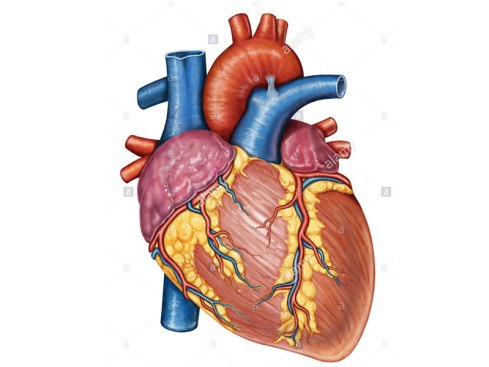 Image result for OAUTHC Performs 70 Open Heart Surgeries In Two Years, Over 1000 Endoscopy Procedures In One Year