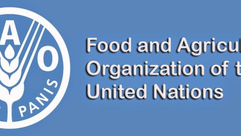 188478a4 fao - FAO says 4m Nigerians face acute food insecurity