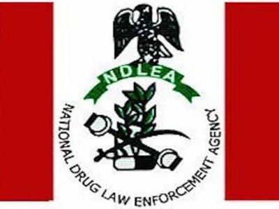 NDLEA Arrests 344 Suspected Drug Traffickers in Katsina