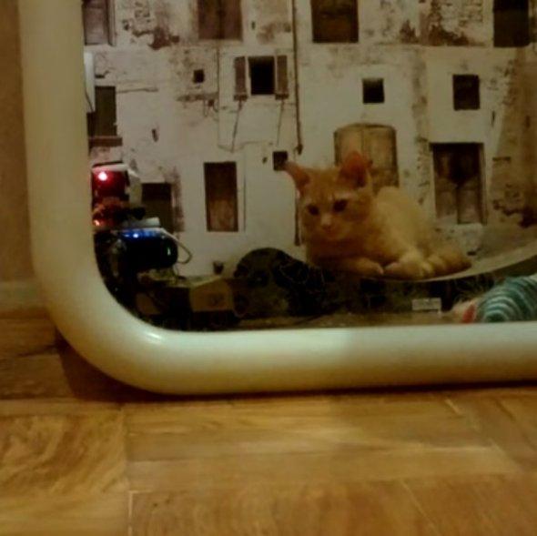 cat_stream